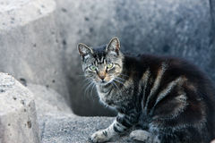 Nervous stray cat watching the camera. Nervous stray cat in a concrete home Royalty Free Stock Image