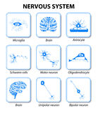 Nervous system. Set icons Royalty Free Stock Image