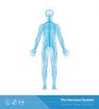 Nervsystemet Royaltyfri Foto