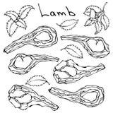 Nervures crues de côtelette d'agneau réglées Griffonnage de vecteur ou croquis tiré par la main de style de bande dessinée d'isol Photographie stock