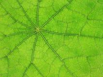 Nervures de lame vertes 03 Photographie stock libre de droits
