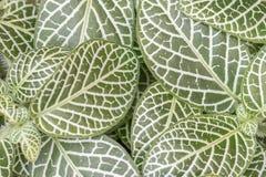 Nerw roślina fotografia stock