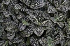Nerw roślina zdjęcie stock