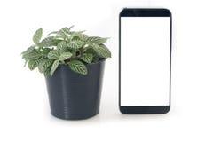 Nerw roślina na flowerpot i pusty ekran smartphone, pastylka, zdjęcia royalty free