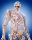 Nerwy górny ciało ilustracja wektor