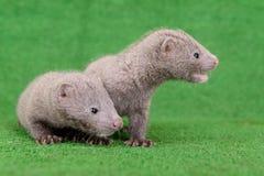Nerz mit zwei Tieren Stockbilder