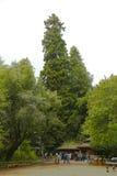 Nesr San Francisco, la Californie de monument de Muir Woods National Images stock