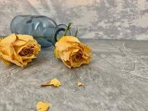 Nessun amore Le rose gialle si sono asciugate e caduto in una bottiglia di vetro blu, fotografie stock libere da diritti