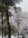 Nessun giorno, come un giorno della neve fotografie stock libere da diritti