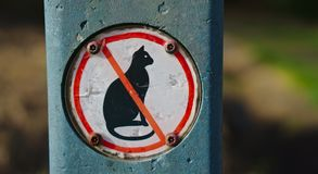 Nessun segno del gatto immagine stock libera da diritti