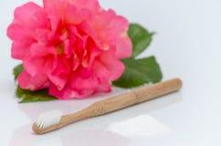 Nessun spazzolino da denti legno, del plastica e xilitolo, lo zucchero della betulla, sono aumentato su bianco Fotografia Stock
