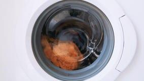 Nessun suono Quaranta 40 secondi del ruzzolamento dei vestiti in senso orario ed antiorario in una lavatrice anteriore del carico archivi video
