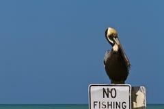 Nessuna pesca Immagini Stock