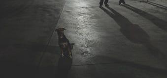 Nessuno esamina il cane ma lo sguardo fotografia stock libera da diritti