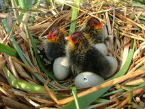 Nest Stockfotos