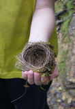 Nest. Bird nest in a child hand Stock Photography