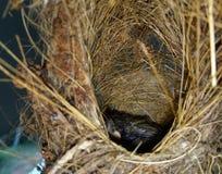 nest stockbilder
