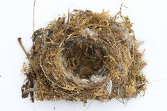 Nest. Of a singing bird with feathers and moss stock photos