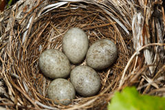 The nest Royalty Free Stock Photos