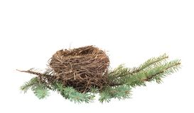 Nest. Empty nest on a branch Stock Images