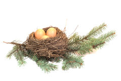 Nest. With eggs on a branch Royalty Free Stock Photo