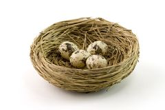 Nest Stock Foto