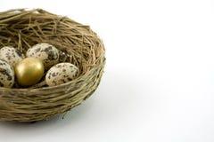 Nest Lizenzfreie Stockbilder