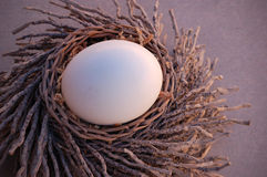 The Nest. Still life of ostrich egg in twig nest royalty free stock images