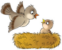 Nest. Isolated clip-art and children's illustration for yours design, postcard, album, cover, scrapbook, etc Stock Images
