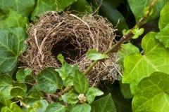 Nest Royalty-vrije Stock Afbeeldingen