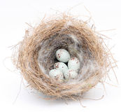 Nest. Stock Photography