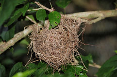 Nest. Bird nest in a tropical forest royalty free stock photo