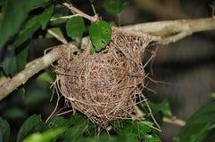 Nest Lizenzfreies Stockfoto