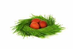Nest. Some eggs in a green nest Royalty Free Stock Photo