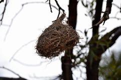 nest Stock Fotografie