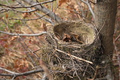 Nest Royalty Free Stock Photos