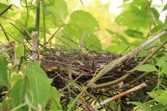 nest royalty-vrije stock foto's