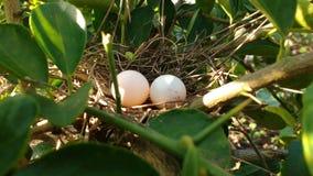 nest Royalty-vrije Stock Fotografie
