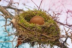 Nest Stock Photos