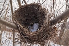 Nest abandoned in the winter forest. Snow-covered nest abandoned in the winter forest. Snowy deserted bird house Stock Photography