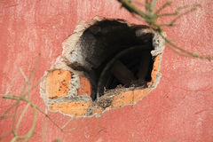 Nest in the alcove Royalty Free Stock Photo