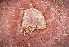 Nest ant. The ant`s nest on floor With its food Stock Image