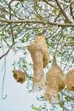 Nest auf Baum Lizenzfreie Stockfotos