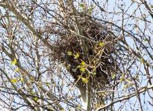 Nest auf dem Baum in der Natur Stockfotos