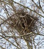 Nest auf dem Baum in der Natur Lizenzfreies Stockbild