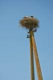 Nest auf einer Spalte Stockfotografie