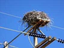 Nest auf elektrischen Getriebe-Drähten Lizenzfreie Stockfotografie