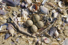 Nest on the Beach Royalty Free Stock Photo