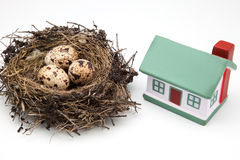 Nest of bird and House Stock Image