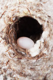 Nest Royalty Free Stock Image